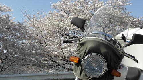 桜 ホーネット 旭風防