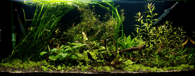 420 litre: remainder of plants added