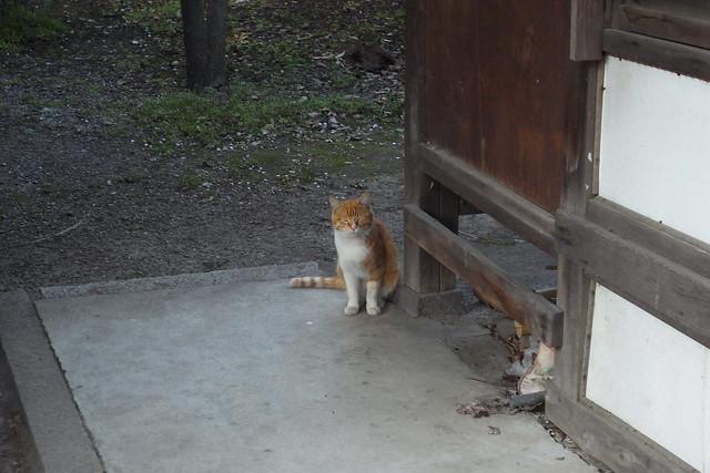 Today's Cat@2011-04-14