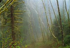 (elias.and.theresa.carlson) Tags: mist film fog oregon analog forest 35mm kodakportra400vc olympusom1n zuiko50mm18