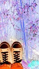 FoV ~ Bamboo-Style (Ar~Pic) Tags: california fun different bamboo inversion whynot variation droid fov steppinout yourverybest feetonvacation crazeeeeeee yesthosearemychuckswithmyfeet boredwiththesameole antireality cartoon~ish cartoon~esque