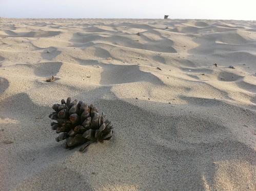 Pine Cone Venice Beach