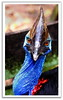 Emu Stock Photography : BIG Bird Eye (Kenny Teo (zoompict)) Tags: light bird beautiful animal canon wonderful lens zoo photo yahoo big google photographer view feather best getty emu kenny zoompict singaporelowerpiercereservoir