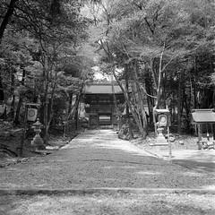 road to the gate (estmsk) Tags: rodinal150 selfdevelopment fujifilmneopan100acros rolleiflex35fxenotar schneiderkreuznachxenotar7535