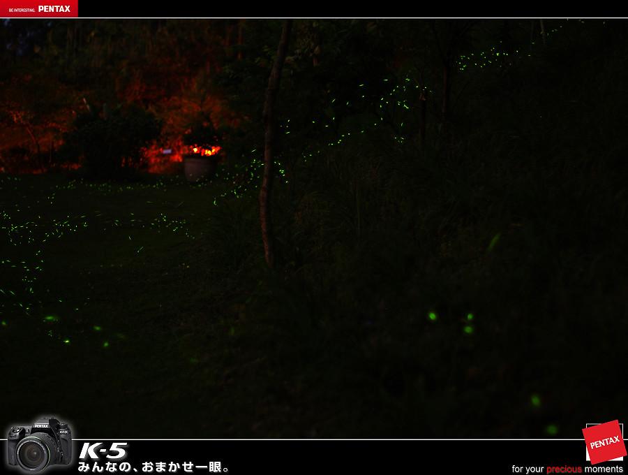 桃李河畔 螢火蟲聚會