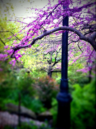 Blooming in central park