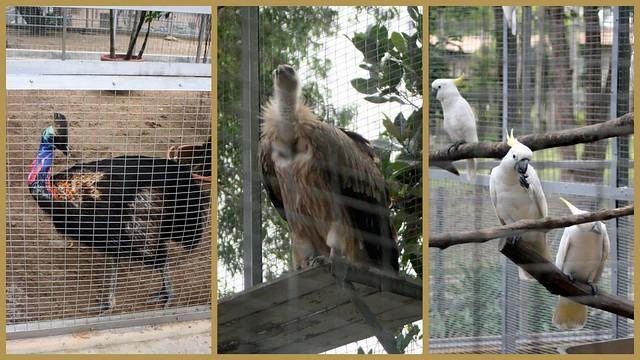 Zoo-birds