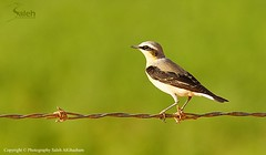 Freedom of nature (saleh alghasham    iBnghasham.com) Tags: nature freedom sony alpha 70200 f28 saleh a55  55a sal70200g onaizah  alghasham