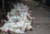 Chicken assembly line, Empress market (Ameer Hamza) Tags: pakistani bazaar sind sindh karachiwalla empressmarket heritagesite ameerhamza heritageofpakistan gettyimagespakistanq2 traditionalbusinessinpakistan