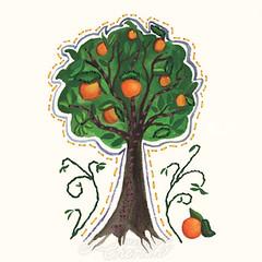 Orange Tree - Something to Cherish