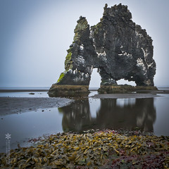 Hvitserkur, a geological oddity in Northern Iceland (ice-cold photography) Tags: ocean red sea white reflection beach nature water weather yellow rock stone landscape lava iceland sand mood seagull dream atmosphere calm atlantic arctic troll algae geology oddity legend seashore guano seabirds nesting rockformation turnedtostone geological hnavatnsssla hvitserkur hvtserkur inspirationallandscape