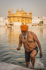 Sikh Bathing in the Nectar Pond (viwehei) Tags: india men beautiful portraits interesting asia faces gorgeous indian religion guys holy turban sikh punjab amritsar goldentemple mnner punjabi hombres flickrduel earthasia nectarpond