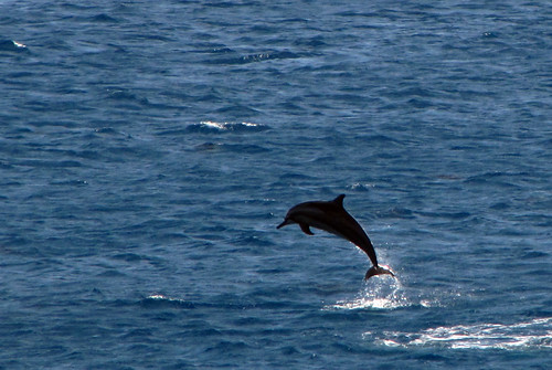 Dolphin in flight (1)