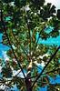 Elevarse (Albertina Fotografia) Tags: contraluz mexico arbol mar tulum aves cielo caribe vegetacion