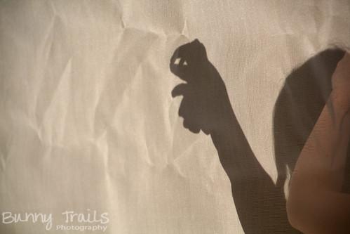 136-365 shadow critter