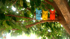 As corujas esto se reunindo... (Cical Arte) Tags: green brinquedo arte cardboard recycle reciclagem ecofriendly papelo toyart papelhiginico rolodepapelhiginico