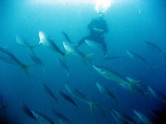 """immersione indonesia- ottobre 2006 (None"""") Tags: coral indonesia underwater nemo none diving immersione coralli fondalimarini divingindonesia immersioneindonesia stefanonecittadinodelmondo"""