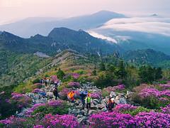 Mt. seorak - IMGP8229 (oasisframe) Tags: mountain flower clouds landscape azalea 설악산 seoraksannationalpark 645d mtseorak 국립공원