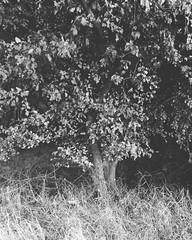 Hi #autumn ! #stalowastopa #kamilcichon (Kamil Cicho) Tags: instagramapp square squareformat iphoneography uploaded:by=instagram moon