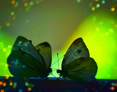 When I look into your eyes ... it's like falling in love all over again. (natus.) Tags: butterflies bokeh sensuallook romantic macro animals love surrealismus standing
