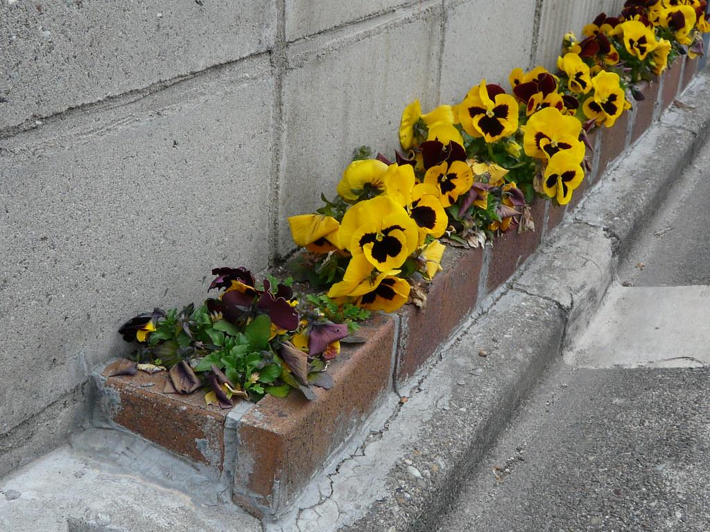 Slim Flower Garden