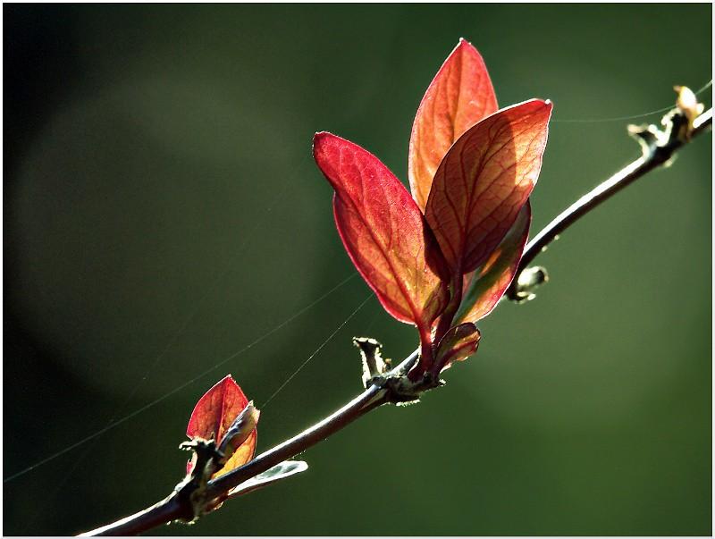 Vos plus belles photos du mois de mars 2011 5571605093_b3a7406334_b