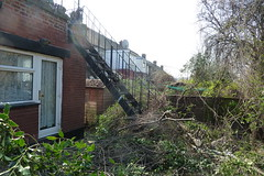 "Holly Tree gone ""After"" (Tim Callaghan) Tags: gardening hollytree treesurgeon choppeddown southviewavenue nptreecare"