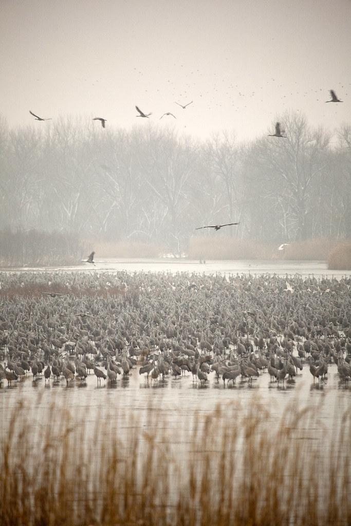 2011 03-28 Adam Thede - Sandhill Crane Migration in Nebraska