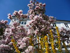 Farb-und Blütenexplosion