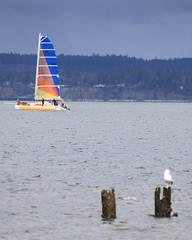 Renew your passions daily. (s.s.minnow) Tags: ocean seattle sea seagulls sailboat sailing pacific northwest seagull gull gulls pacificnorthwest sail ballard sailboats goldengardens seattlest seattlewa viewbug