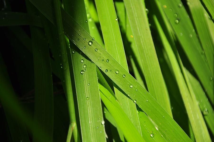 Green june