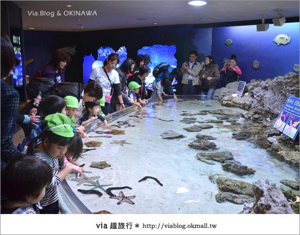 【沖繩景點】美麗海水族館~帶你欣賞美麗又浪漫的海底世界!6