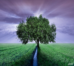 The perfect loneliness (gred.) Tags: trees landscape purple lonelytree magictree aporia idream impressedbeauty thesecretlifeoftrees ineedatree