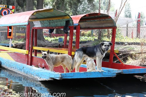 Dogs... ON BOATS!