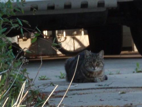 Cat in Driveway