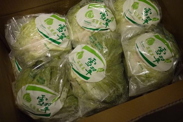 雪翠高麗菜02