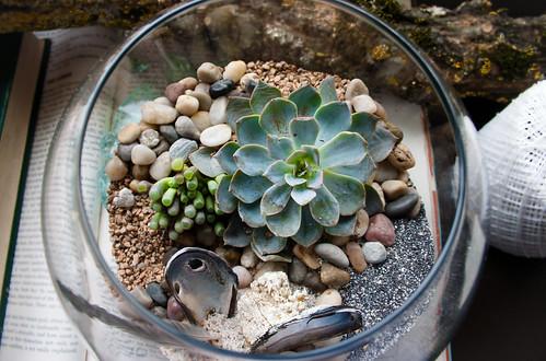 My desert terrarium