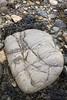 14-4-2011 (Copperhobnob) Tags: shells seaweed rock sand stcombsbeach