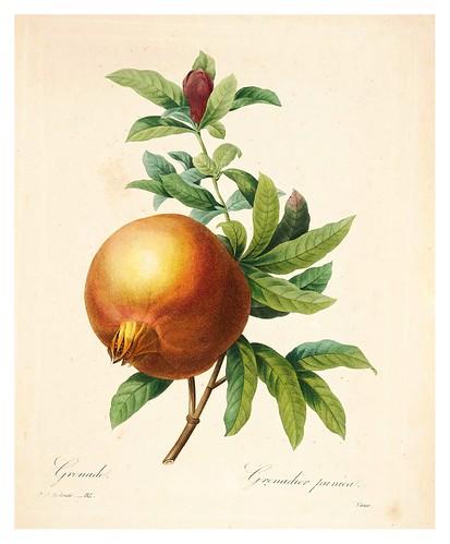 008-Granada-Choix des plus belles fleurs…1827- P.J.Redoute