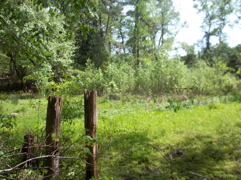 What's left of Getzens Pond