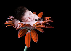 newborn art (Dalia Drulia) Tags: flower kids canon children babies gerbera newborn cs3 inafant babyintheflower nynewbornphotographer druliaphoto newbornny