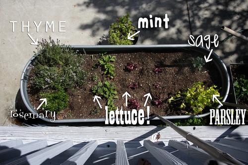 i'm growing stuff!