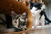 Milli5 101 (Fantasyfan.) Tags: cats pets playing look animals topv111 tag3 taggedout topv555 topv333 kitten tag2 tag1 basket curious milli sneaking täystuho fantasyfanin highqualityanimals