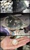 لاکپشت (آق مجتبی) Tags: iran gheshm