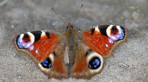 Dream Symbol Dictionary: Last Night I Had A Dream About Butterfly ...