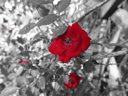 Red, in black and white