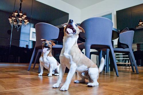 HAPPY DOGS!!!! DSC_2144