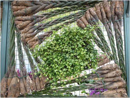 馬拉巴栗(發財樹)