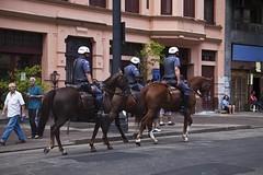 So Paulo - Virado Cultural (AF Rodrigues) Tags: animal brasil sopaulo sp campo rodrigues cavalo adriano guarda policial polcia ferreira cavalaria equno