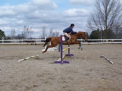 208295_10150157696457276_516137275_6647019_7654352_n (Rising Star Sport Horses) Tags: courtney brando rs